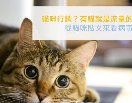 病毒行銷 | 貓咪圖文引領的社群貼文潮流,創造你的流量就靠這招
